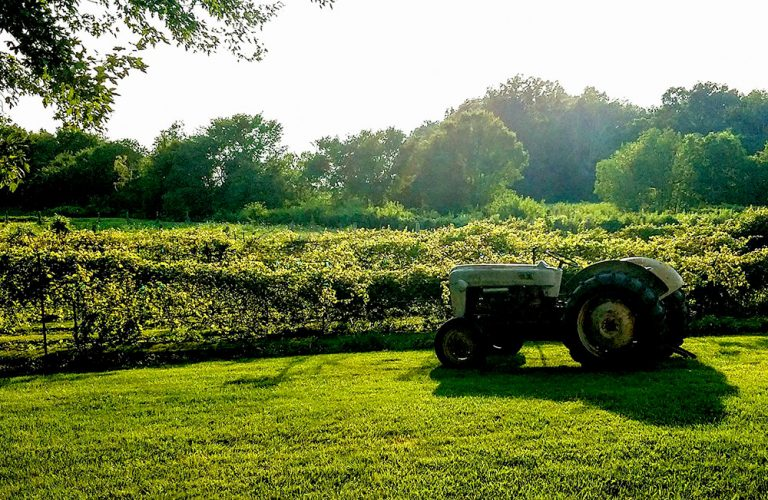 Shamrock Vineyard